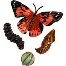 Životní cyklus - Motýl