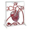 Pumpující model srdce