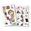 Pexeso Kočky 32 obrázkových dvojic