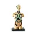 Anatomický model lidského těla