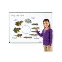 Magnetický životní cyklus žába