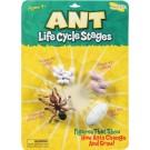 Životní cyklus - Mravenec
